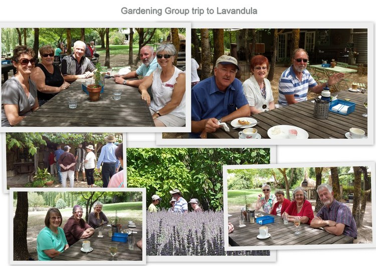 gardening_group_lavandula